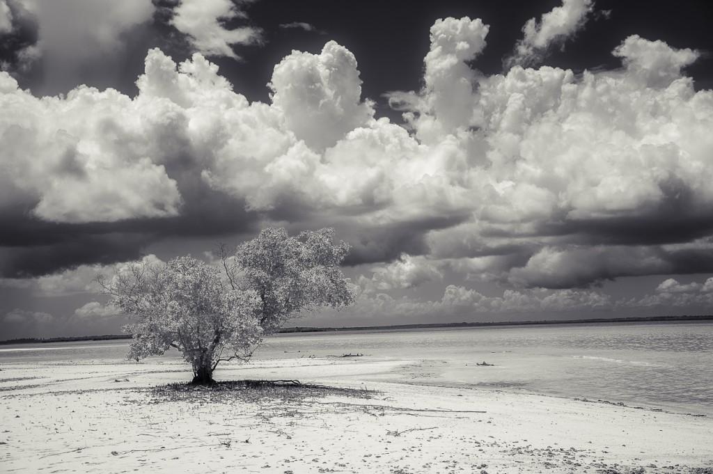 ©Daniel_Vuillemin_Zanzibar_-4718